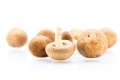Shitake Mushrooms. Whole raw Shitake Mushrooms  on white background Stock Photos