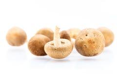 Shitake Mushrooms Stock Photos