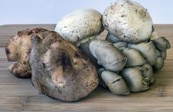 Shitaki,portabella,oyster mushrooms. Portabelloa,oyster and shtaki mushrooms on cutting board in counter Stock Image