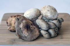 Shitaki,portabella,oyster mushrooms. Portabelloa,oyster and shtaki mushrooms on cutting board in counter Royalty Free Stock Photos