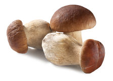 Shite mushrooms Royalty Free Stock Photography