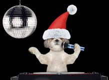 Shitzu dog in christmas hats singing with microphone a karaoke song. Isolated on black. Background royalty free stock photos