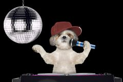 Shitzu dog singing with microphone a karaoke song in a night club -- isolated on black. Background stock images