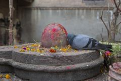 Shiva Lingam Stone Sculpture decorated with red powder with pigeon pecking. Closeup of Shiva Lingam Stone Sculpture decorated with red powder with pigeon pecking stock photography