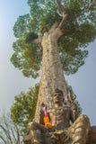 Shiva staty under det stora skället för Dipterocarpus alatusträd som ser upp Dipterocarpus alatus också som är bekant som 'Yang N arkivbild