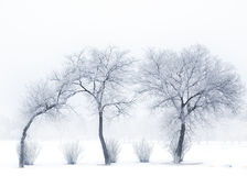 Shivering trees Stock Photo