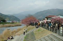SHIZUOKA, JAPÓN - 24 DE FEBRERO: Los turistas están visitando el cherr Fotografía de archivo libre de regalías