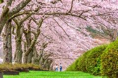 Shizuoka, Japan im Frühjahr Stockbild