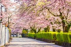 Shizuoka, Japan in Spring. Shizuoka, Japan old town streetts in Spring in Spring season stock image