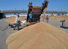 On the current mobile grain cleaning machine Stock Photography