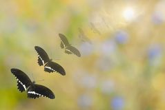 Shoal of black butterflies Royalty Free Stock Image