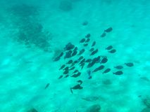 Shoal of Fish. A shoal of fish in the turquoise sea waters royalty free stock images