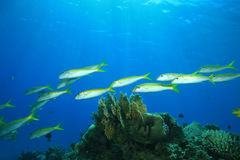 Shoal of Fish Royalty Free Stock Photos