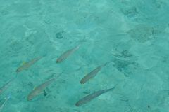Shoal of fish Stock Photography