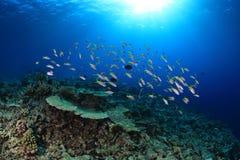 Shoal of fish Stock Photo