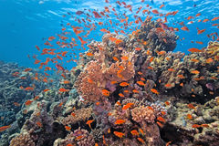 Shoal fish on the coral reef Stock Images