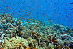 Shoal of fish on the coral reef Royalty Free Stock Photos
