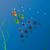 A shoal of fish in deep water. A vector illustration of a shoal of fish in different colors, with bigger and brighter main fish on the front and small, neutral Royalty Free Stock Photo