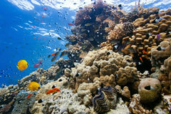 Shoal fish on the reef Stock Images