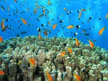 Shoal of fish on the reef Royalty Free Stock Images