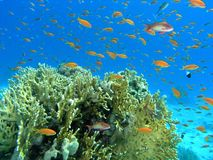 Shoal of fish on the reef Royalty Free Stock Photography