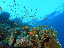 Shoal of fish on the reef Stock Images