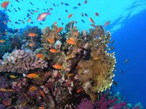 Shoal of fish on the reef Stock Photo