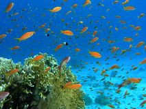 Shoal of fish on the reef Stock Photography
