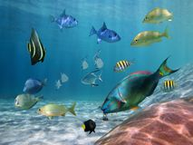 Shoal of fish on a sandy seabed Stock Images