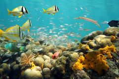 Shoal of fish in a shallow coral reef stock photography
