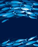 Shoal of fishes Royalty Free Stock Photo