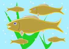 Shoal of goldfish Royalty Free Stock Photos