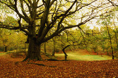 Shoal Hill, Cannock Chase forest in Autumn Royalty Free Stock Photography