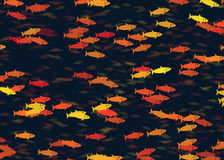 Shoal of multicolored fish pattern Royalty Free Stock Photos