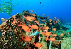 Shoal of Squirrelfish around underwater wreckage. Soldierfish shoal around metal wreckage stock image