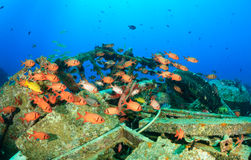 Shoal of Squirrelfish around underwater wreckage Royalty Free Stock Images