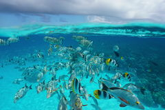 Shoal of tropical fish underwater with cloudy sky Stock Images