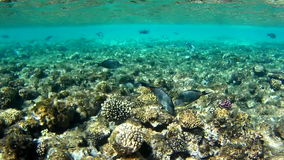 Shoals of fish near a coral reef. Red sea, Egypt stock footage