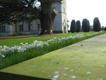 Shobdon-Kirche im Frühjahr mit Schneeglöckchen Stockbild
