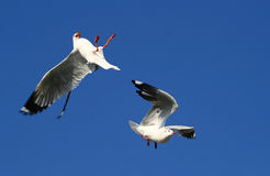 Shocked birds. The moment of shocking happened with one of seagulls Stock Photo
