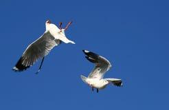 Shocked birds Stock Photo