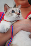 Shocked Cat. A photo taken on a cat with shocked expression Stock Images