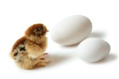 Shocked chicken Stock Photo