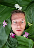 Shocked expression. Man with shocked expression surrounded by ti leaves and orchids Royalty Free Stock Photos