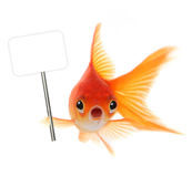 Shocked Goldfish Isolated on White Background Stock Image