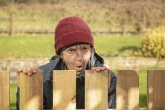 Shocked mature woman looking over fence. In garden royalty free stock images