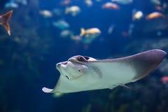 Shockfish Stock Image