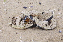 Shoe covered with mussels on sand Royalty Free Stock Photos