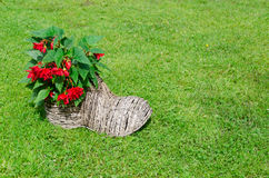 Shoe flower pot with begonias. rural decoration Stock Image