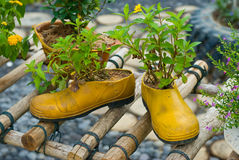 Shoe flowerpot Stock Photos